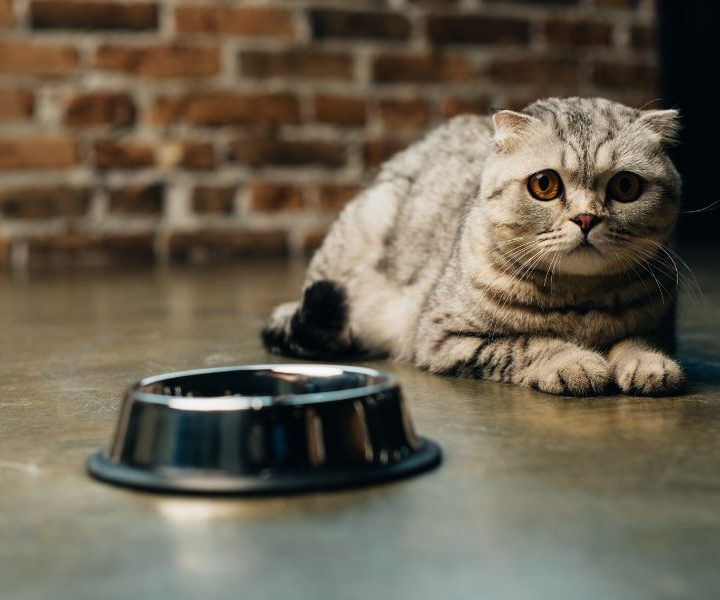 How to help my cat when moving home?