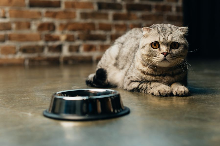 How to help my cat when moving home